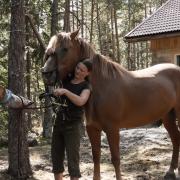 Hevosen valmistelu